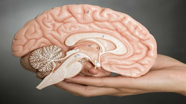 Mind-blowing' discovery revolutionizes  our understanding of how brain works