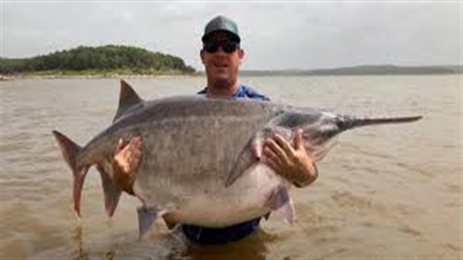 Oklahoma man's 147-pound paddlefish believed to be a world record