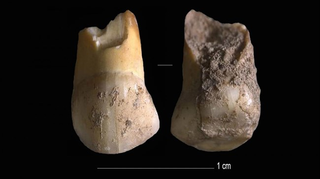 48,000-year-old tooth belonging to one of last Neanderthals in Italy