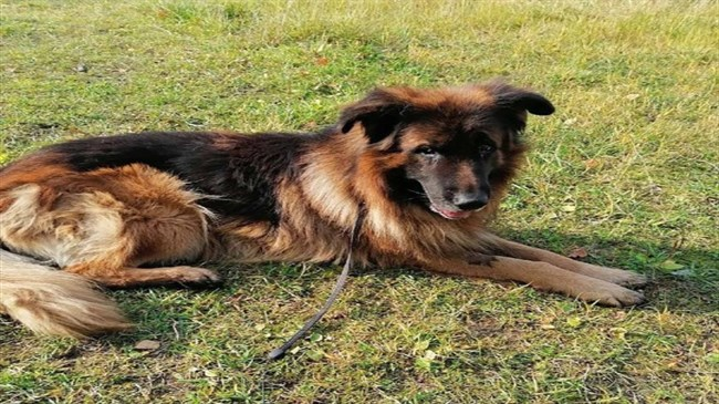 Dog digs himself out of grave in Russia after owners bury him alive