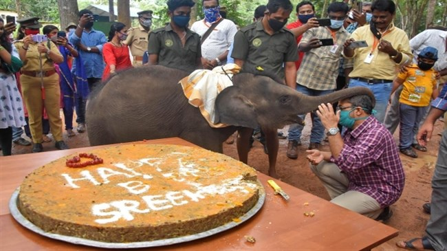 Sreekutty the baby elephant celebrates first birthday With jumbo cake