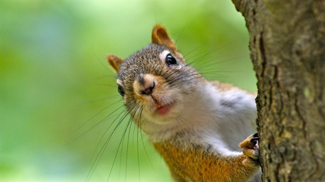 Squirrel causes South Carolina outages