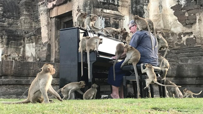Pianist's tones soothe Thailand's hungry monkeys