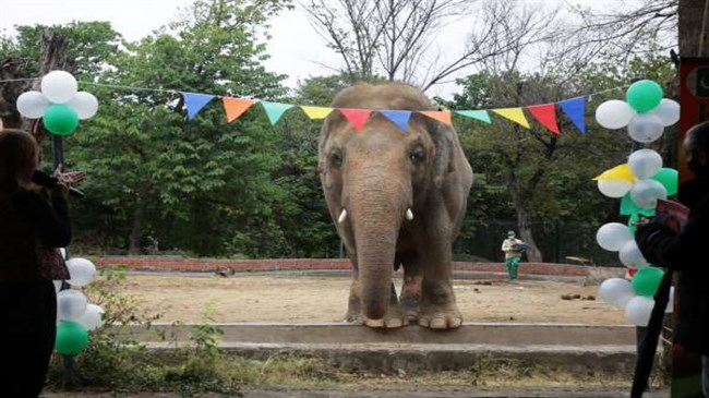 'World's loneliest elephant' will finally get some friends