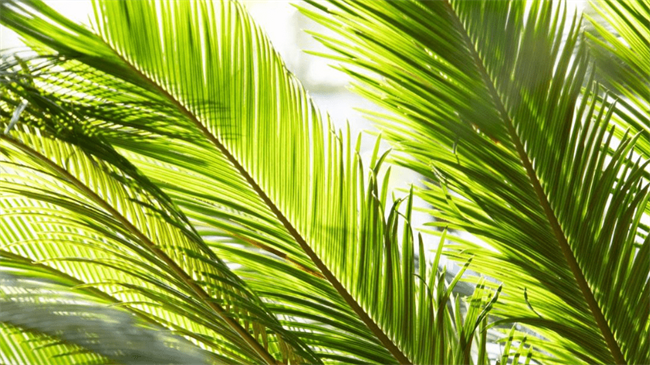 Palm tree helps toddler survive 4-story fall from apartment in US