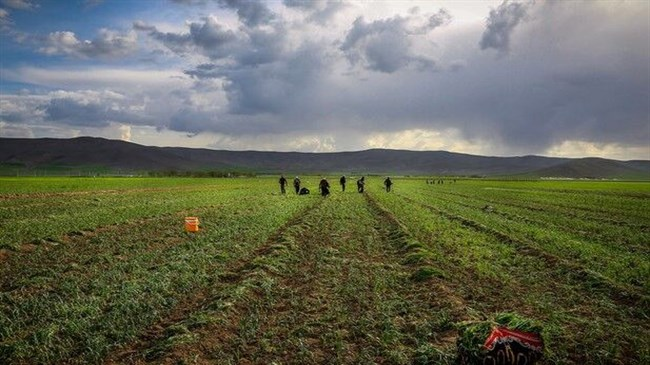 FAO empowers farmers to improve agriculture water productivity in Iran